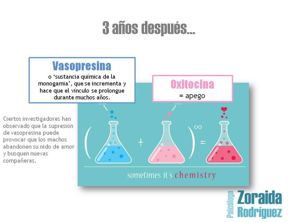 quimica_del_amor_vasopresina