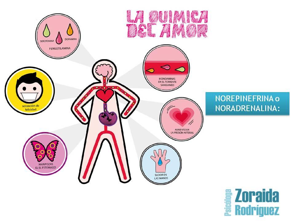 Los compuestos químicos y las hormonas que genera el amor